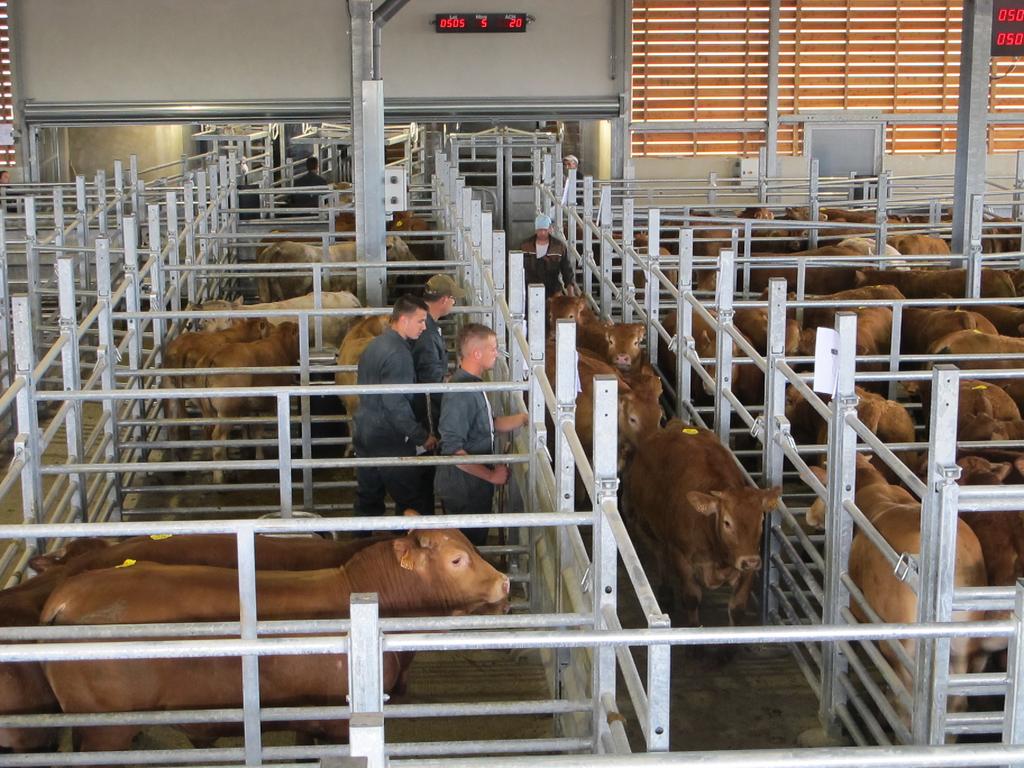Mise en place du bétail après apport